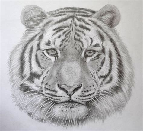 Cool Drawings Of Animals Pencil Art Drawing Animal Pictures For To Draw