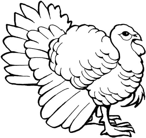 turkey coloring pages coloring pages to print australian brush turkey coloring page animals town