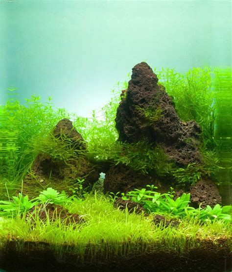 layout aquascape nano 441 best nano aquas images on pinterest fish tanks fish