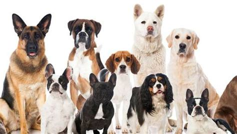 breed quiz can you guess the breed with just 1 hint mnn nature network