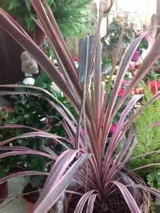 Plante Verte Exterieur Jardin