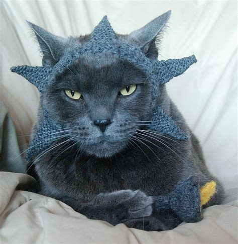 Cat Hats by Cats In The Hats 15 Hilarious Pictures Bloger