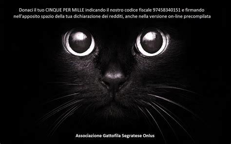 cupole san giuliano negozi sito web dell associazione gattofila segratese onlus
