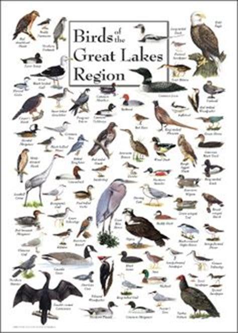 1000 images about birding on pinterest bird