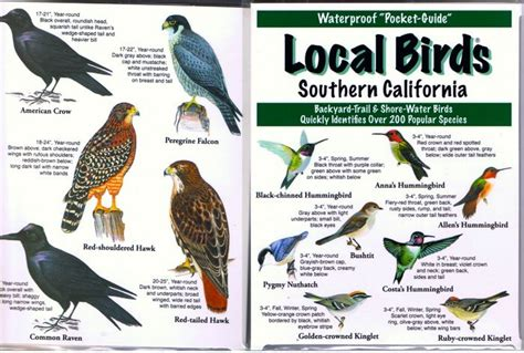 southern california birds google search california