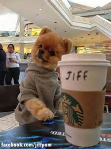 A huge fan of Starbucks jiff   Jiff selfies   Pinterest   Starbucks and Fans
