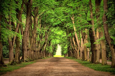 nice landscape road green trees beautiful landscape nature road green