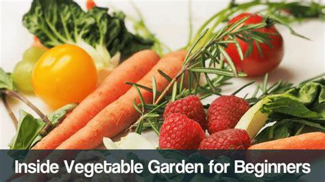 inside garden shop grow fresh herbs vegetables indoors