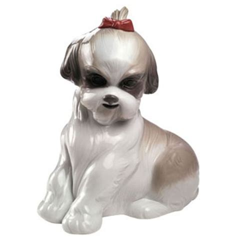 shih tzu puppies price range in india nao pered shih tzu and