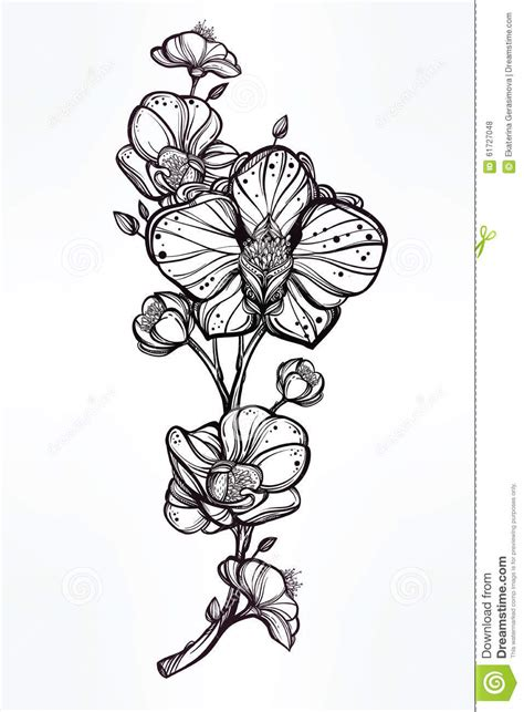 hand drawn orchid flower illustration stock vector