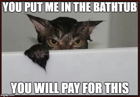 Wet Cat Meme - angry wet cat wants revenge imgflip