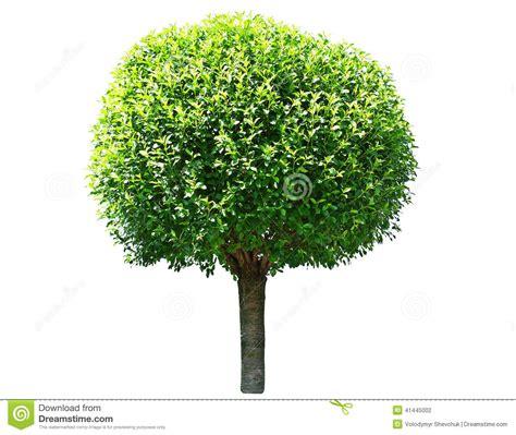around tree tree stock photo image 41445002