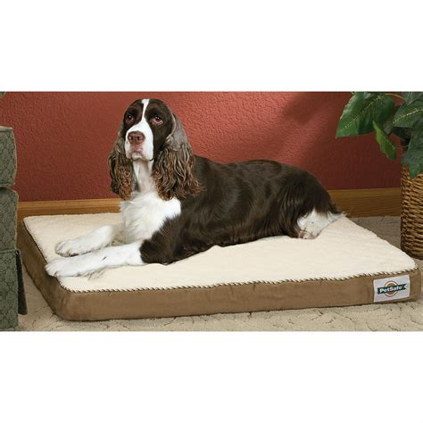heated dog beds petsafe 174 heated pet bed 153598 kennels beds at