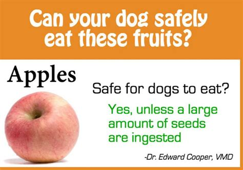 are oranges okay for dogs can your safely eat these fruits beingstray