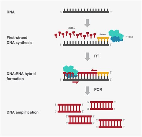 how much template dna for pcr sequencing experiences for pcr x sequenciamento