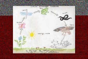 la catena alimentare spiegata ai bambini come si nutrono gli animali la catena alimentare paperblog