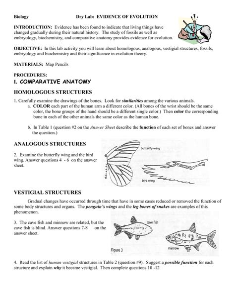 Comparative Anatomy Worksheet Answers