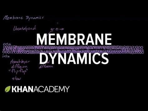 membrane dynamics cells mcat khan academy