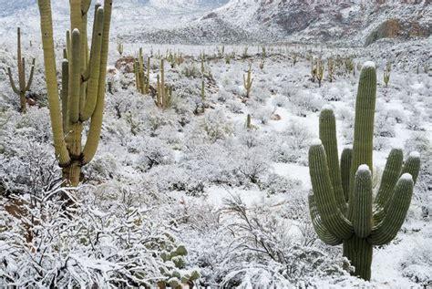 snow in desert galleries