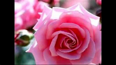 rosa color significado color rosa