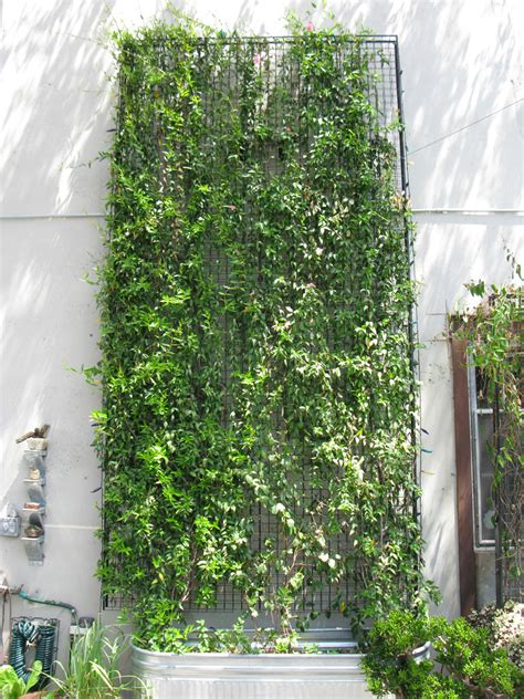 how to prune a wall mounted green facade green wall