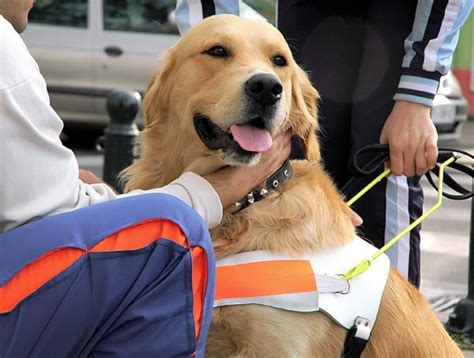 safer dividend healthcare dogs glaxo pfizer abbvie merck pace  april pack seeking alpha