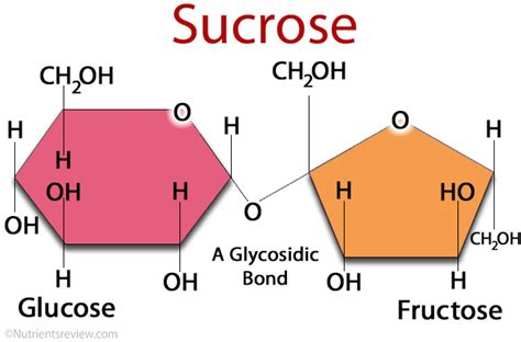 sucrose structural diagram related keywords suggestions for sucrose structure