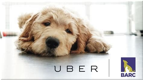 uber puppies so what are uber puppies