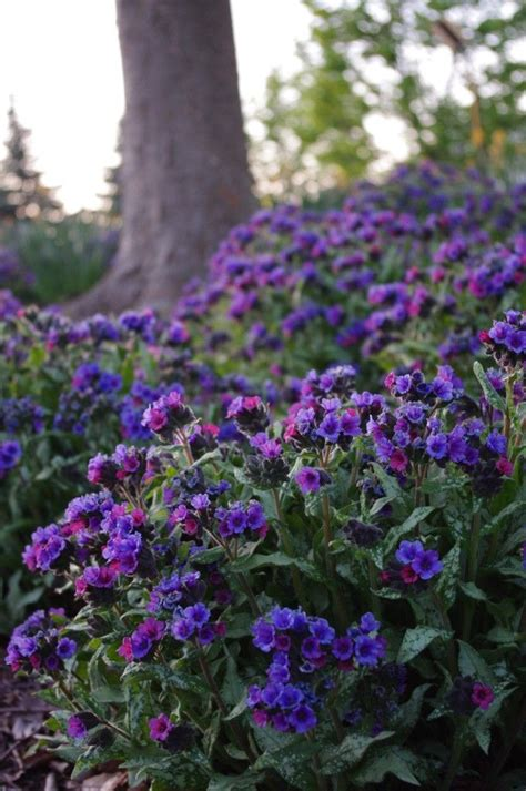 top 28 shade perennials zone 5 favorite spring blooming perennials hgtv pink plant shrubs
