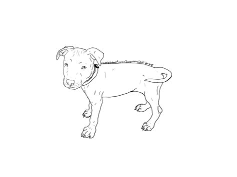 how to a puppy pitbull how to draw a pitbull puppyhow to draw a pitbull puppy step by step for