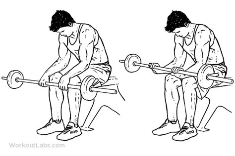 reverse barbell wrist curl over bench seated palm down wrist curl illustrated exercise guide