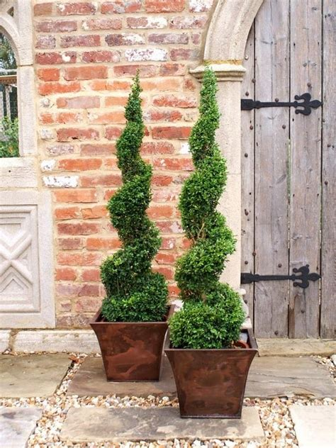 porch topiary best 25 front door plants ideas on front door