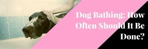 how often should a puppy be bathed how often should you bathe your pet autos post