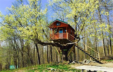 how to build a house how to build a treehouse diy tips cost guide