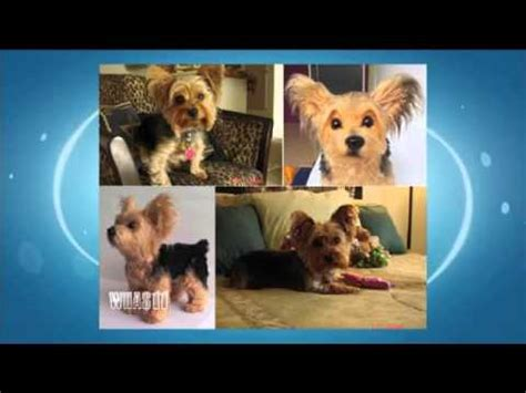 pet technologies youtube cuddle clones can preserve memory of special pet youtube