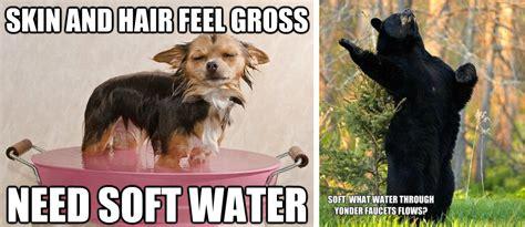 Dog And Cat Memes - cat vs dog meme