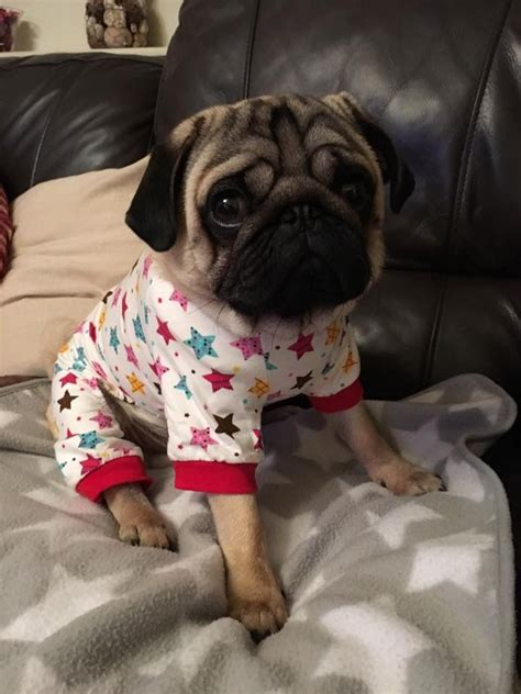 pug pajamas for pugs best 25 pajamas ideas on holidays pajamas and yorkie clothes