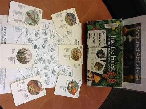 into the food featured activity kit into the forest food chain library news