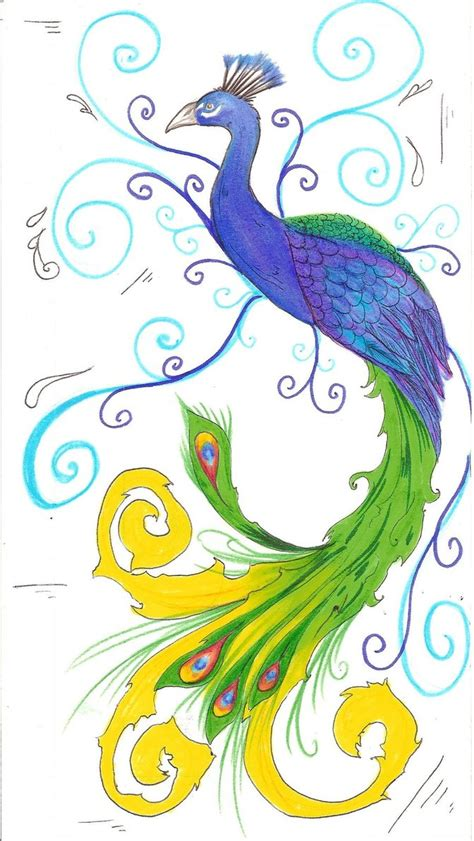 peacock drawing pictures drawing pictures