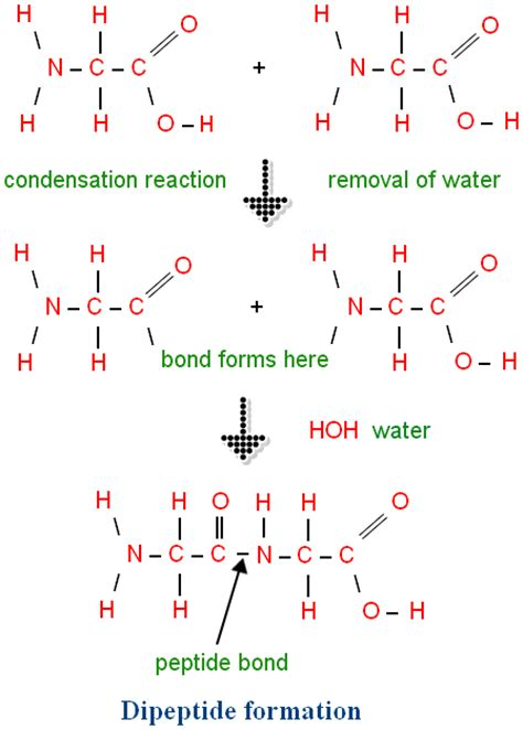 peptide bond what is peptide bond peptide bond