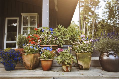 images of 6 flowers in pots the elements of successful container gardening