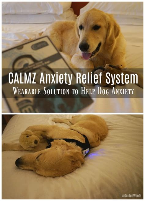 dogs help anxiety calmz anxiety relief system wearable solution to help anxiety
