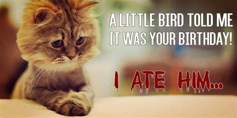 Funny Cat Birthday Meme - funny birthday meme