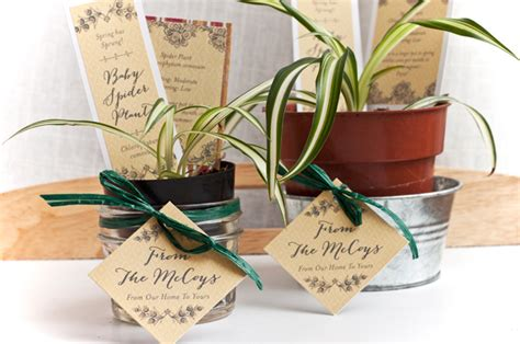 house warming wedding gift idea baby spider plant housewarming gifts evermine blog