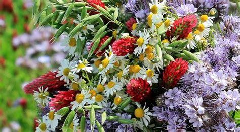 immagine mazzo di fiori mazzo di fiori come sceglierlo idee green
