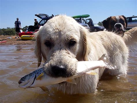 fish for dogs fish images