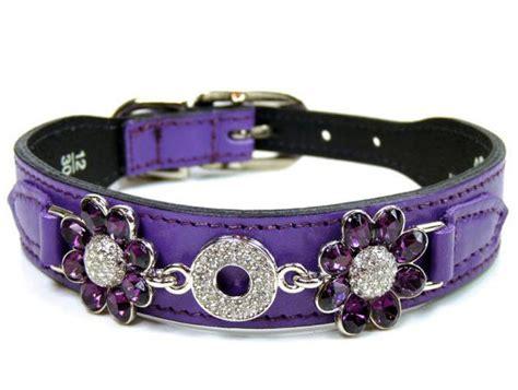 purple collars diamonds luxury leather collars