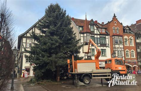 rintelner weihnachtsbaum wird zum zweiten mal gef 228 llt