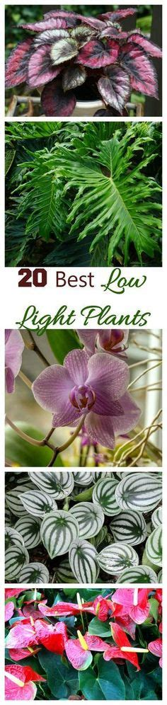 gorgeous house plants    full shade plants