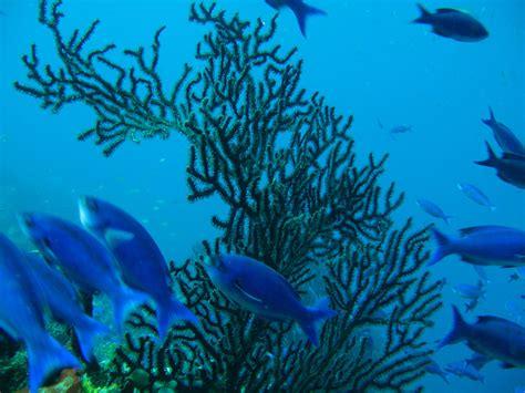 Algae Detox Royal Caribbean by Santa Lucia Castries Palatino Crociere